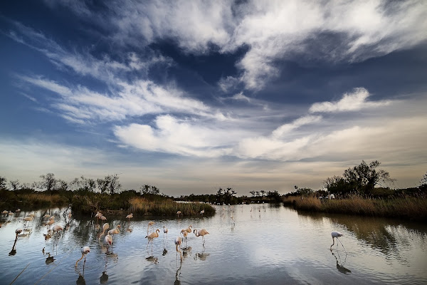 Clouds and flamingos di ped1_dom