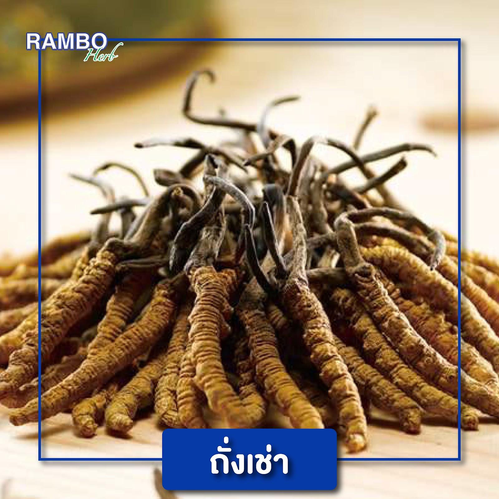 สมุนไพรไทย