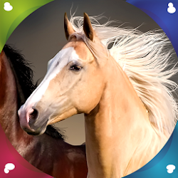 Horse Live Wallpapers