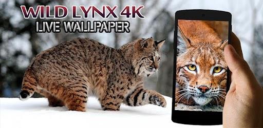 Tải Wild Lynx 4K Live Wallpaper cho máy tính PC Windows