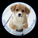 Happy Animals Photos icon