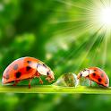 Ladybug Live Wallpapers icon