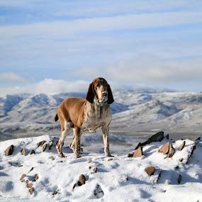Sadie by Ralph MInnitte - Animals - Dogs Portraits