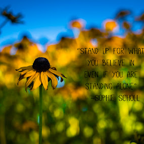 Stand up by Denise Johnson - Typography Captioned Photos ( quote, stand up, typography, flowers, flower )