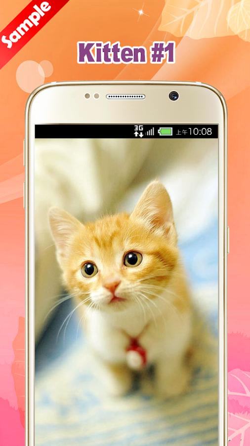 Kitten wallpapers android apps on google play kitten wallpapers screenshot altavistaventures Choice Image