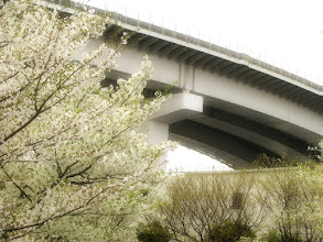 Photo: ■Today's Elevated Expressways It is taken by +Takahiro Yanai ! I found a good place where we can see Elevated Expressways with Sakura !! おはようございます、今日の高架道路をご紹介。 桜と一緒に見れる場所があったのです。 コンデジ持って、出勤中に撮ったという・・・w  #elevatedexpressways #sakura