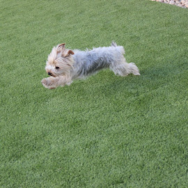 running  by Patricia Dias - Animals - Dogs Running ( jumping, animal, dog playing, dog, fun )