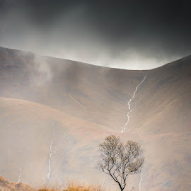 Only one by Strange Jazzy - Landscapes Mountains & Hills ( highlands€skye#tree#mountain#,  )
