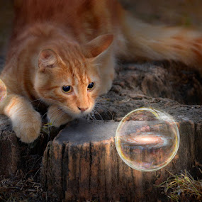 Starlight obsession by Ivan Ivanov - Animals - Cats Playing ( cats, lights, cat, bubbles, night time )