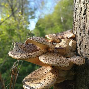 by Karl Erik Straarup - Nature Up Close Mushrooms & Fungi