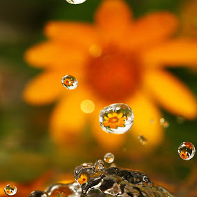Drops by Annemarie Rulos  - Artistic Objects Other Objects