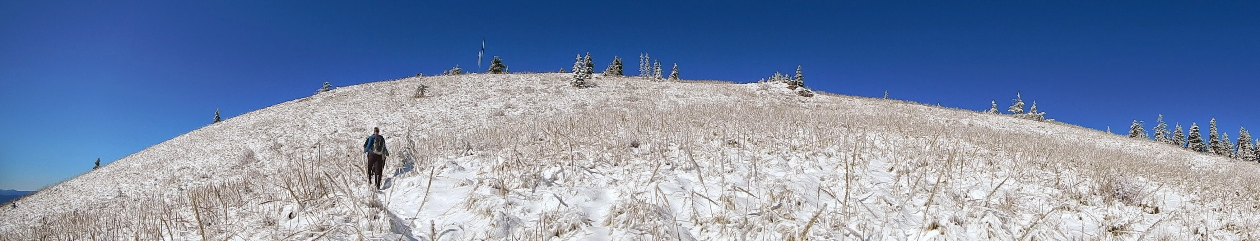 Photo: Huge beargrass field, just waiting for spring.