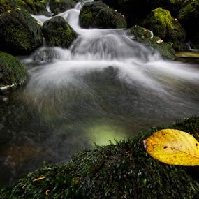 The leaf by Kai Süselbeck - Landscapes Waterscapes ( water, winter, leaf, göllinger wasserfall, austria )