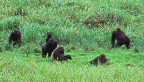 Parque Nacional Akanda