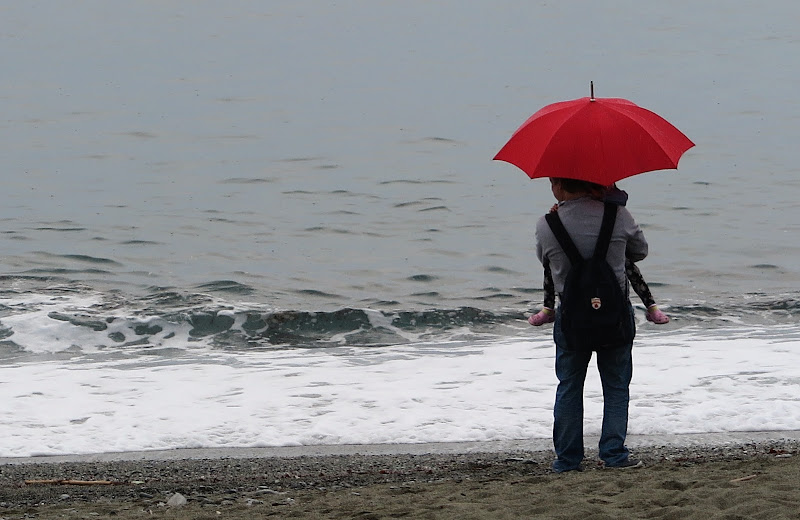 Contemplare il mare. di Piera
