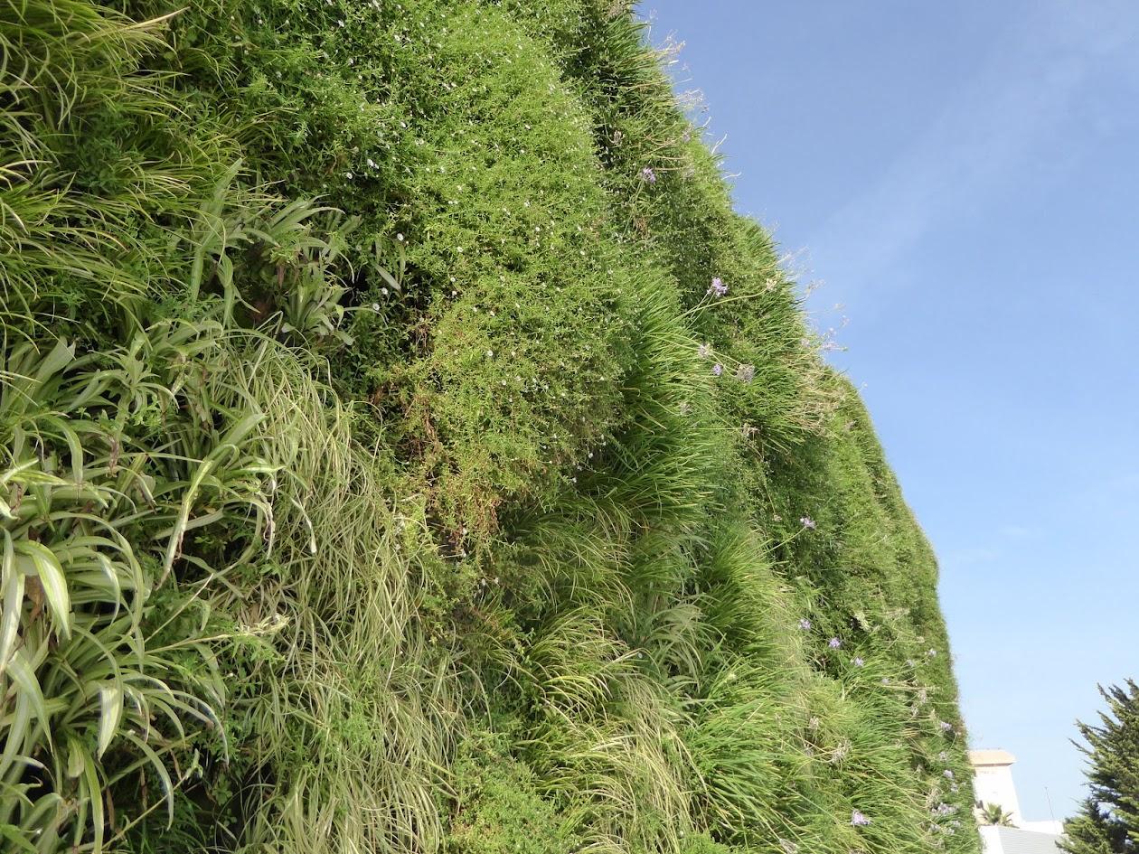 Vegetación en jardín vertical de Mallorca