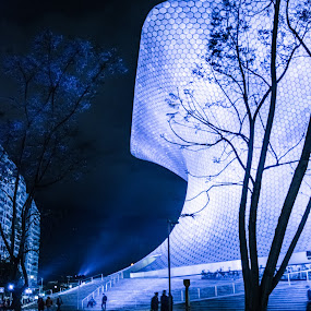 Blue hour by Pilar Gonzalez - Buildings & Architecture Other Exteriors ( blue, blue hour, tree branches, architecture, museum,  )
