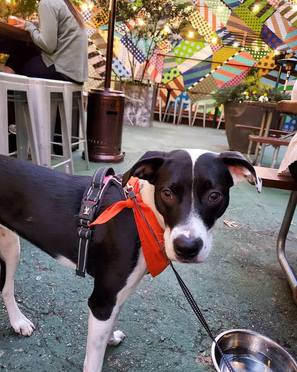 Dogs invited at the Continental Beer Garden. Photo by @Lillianthepuppers.
