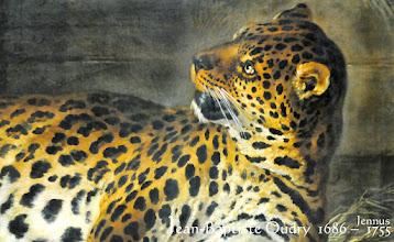 Photo: Leopard
