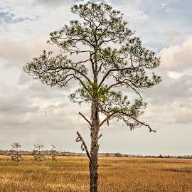 Lone Tree by Richard Michael Lingo - Nature Up Close Trees & Bushes ( georgia, nature, closeup, tree, savannah )