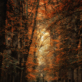 Fairytales and dreams by Dennis Brunel - Nature Up Close Trees & Bushes ( #autumn #orange #light #trees #leaves,  )