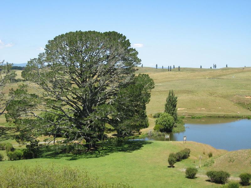 "Photo: ""The Party Tree"" Hobbiton, near Matamata (remains of set from Lord of the Rings)"