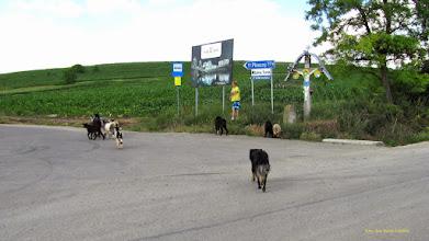 Photo: Drumul Ploscosului - 2011.06.22