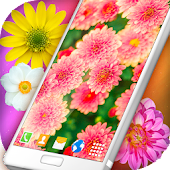 Summer Flowers Live Wallpaper