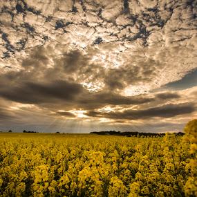by Razvan Teodoreanu - Landscapes Prairies, Meadows & Fields