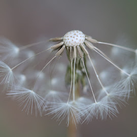 Macro by Marco Carvalhais - Nature Up Close Other plants ( #macro #nature #flower #seeds )