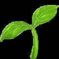 Seedling on Apple iOS 12.2