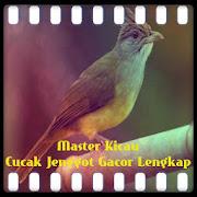 Master Kicau Cucak Jenggot Gacor