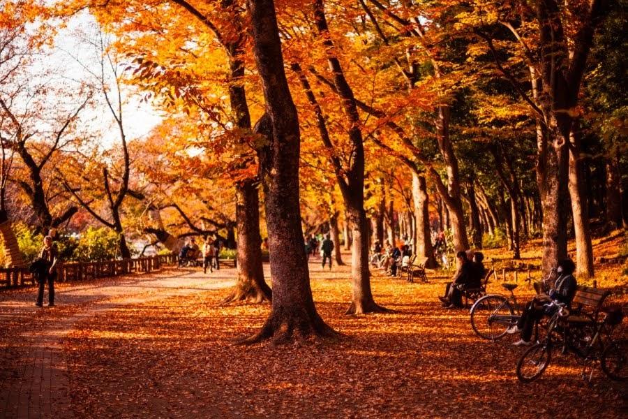 Octubre en Japón, llega el otoño con sus colores y su magia.
