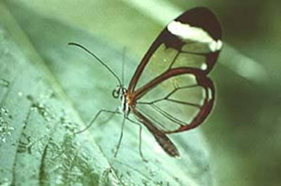 http://drkaae.com/InsectCivilization/assets/Chapter_15_Butterflies_and_Moths._files/image034.jpg