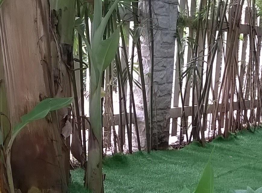 đột ngột với tác dụng của cỏ nhựa nhân tạo tại trường mẫu giáo