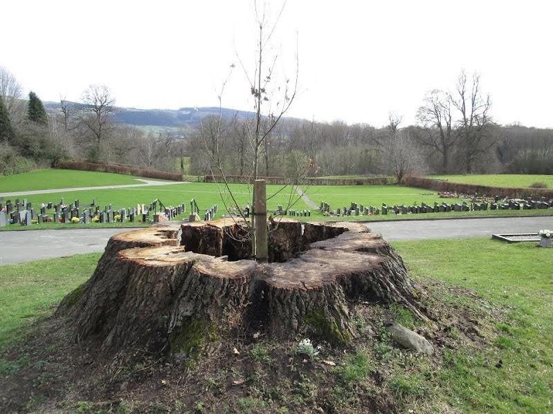 Graveyard sheep problem sorted