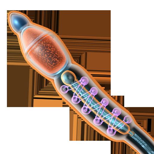 VR Sperm Structure