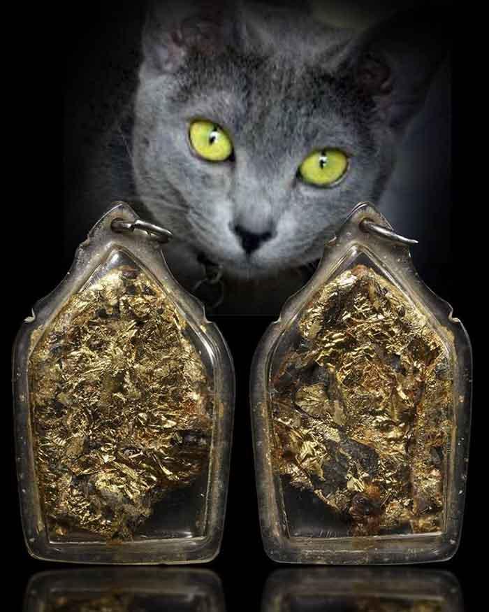 รกแมว ปิดทอง | https://tookhuay.com/ เว็บ หวยออนไลน์ ที่ดีที่สุด หวยหุ้น หวยฮานอย หวยลาว