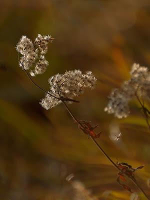 Nei miei sogni.... di www.fioregiallophoto.it
