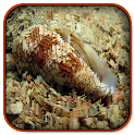 SeaShell Ripple Live Wallpaper icon