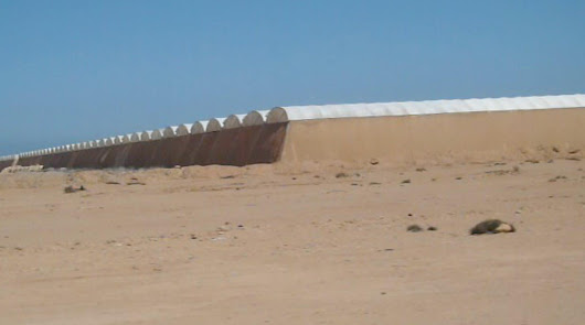 Marruecos vende como propios los tomates del Sáhara