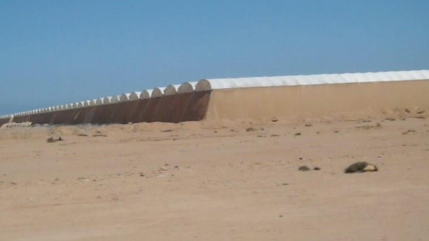 Invernaderos levantados por empresas marroquís en el desierto del Sáhara