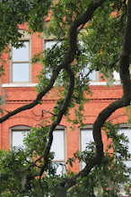 Photo: Branches and windows