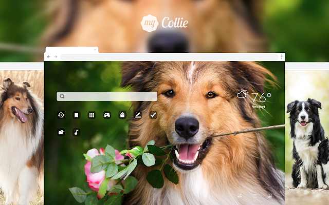 My Collie HD Dog Wallpapers New Tab Theme