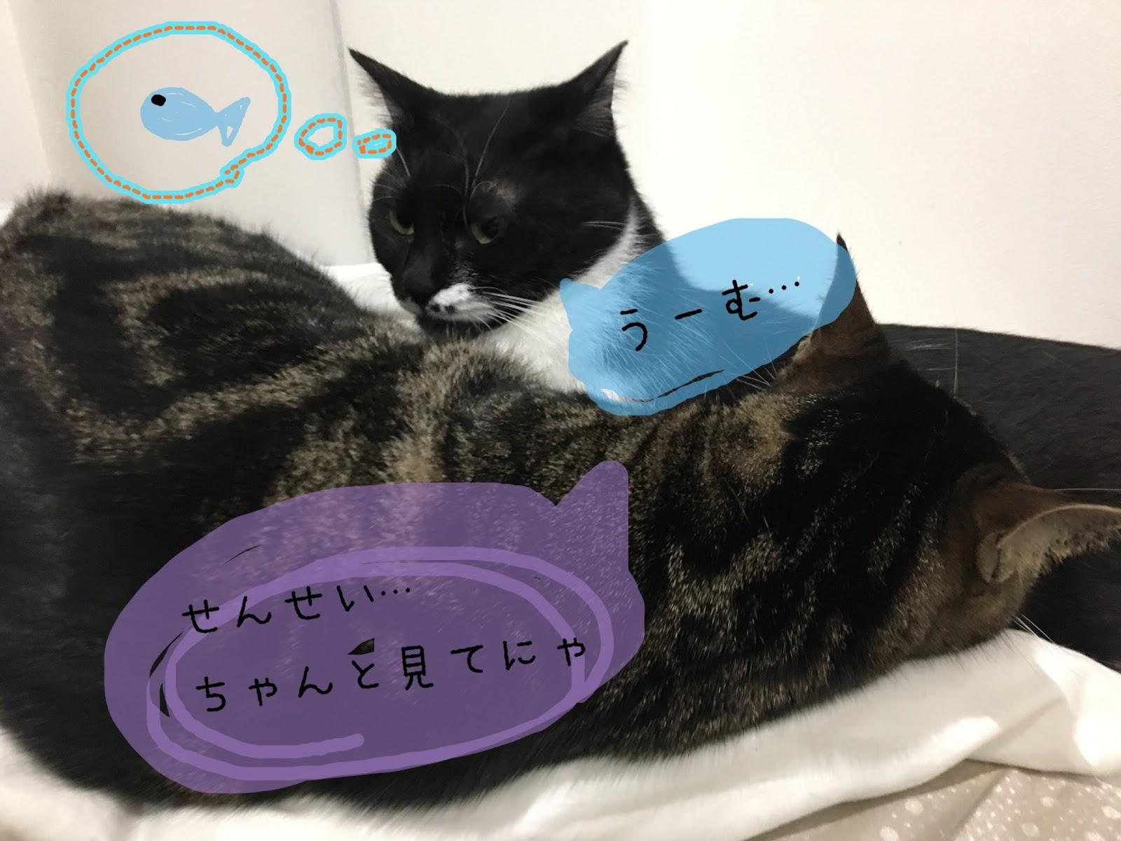 家で出来る!長生きする為の猫の健康管理の方法