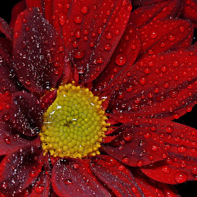 by Ady Putra - Nature Up Close Flowers - 2011-2013