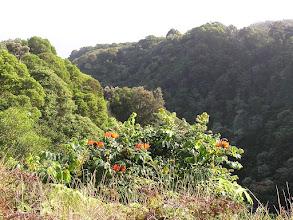 Photo: C1250045 Maui
