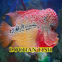 Louhan Fish icon
