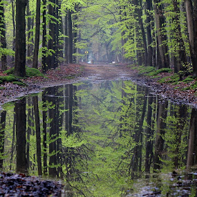 green by Hilda van der Lee - Landscapes Forests ( water, green, reflections, trees, forest,  )