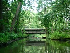 Photo: ciągle w lesie